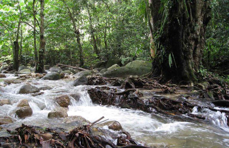 Sungai Sendat Forest Park (Photo: SL Wong)
