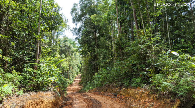 Excision – The Main Threat to Forests in Peninsular Malaysia