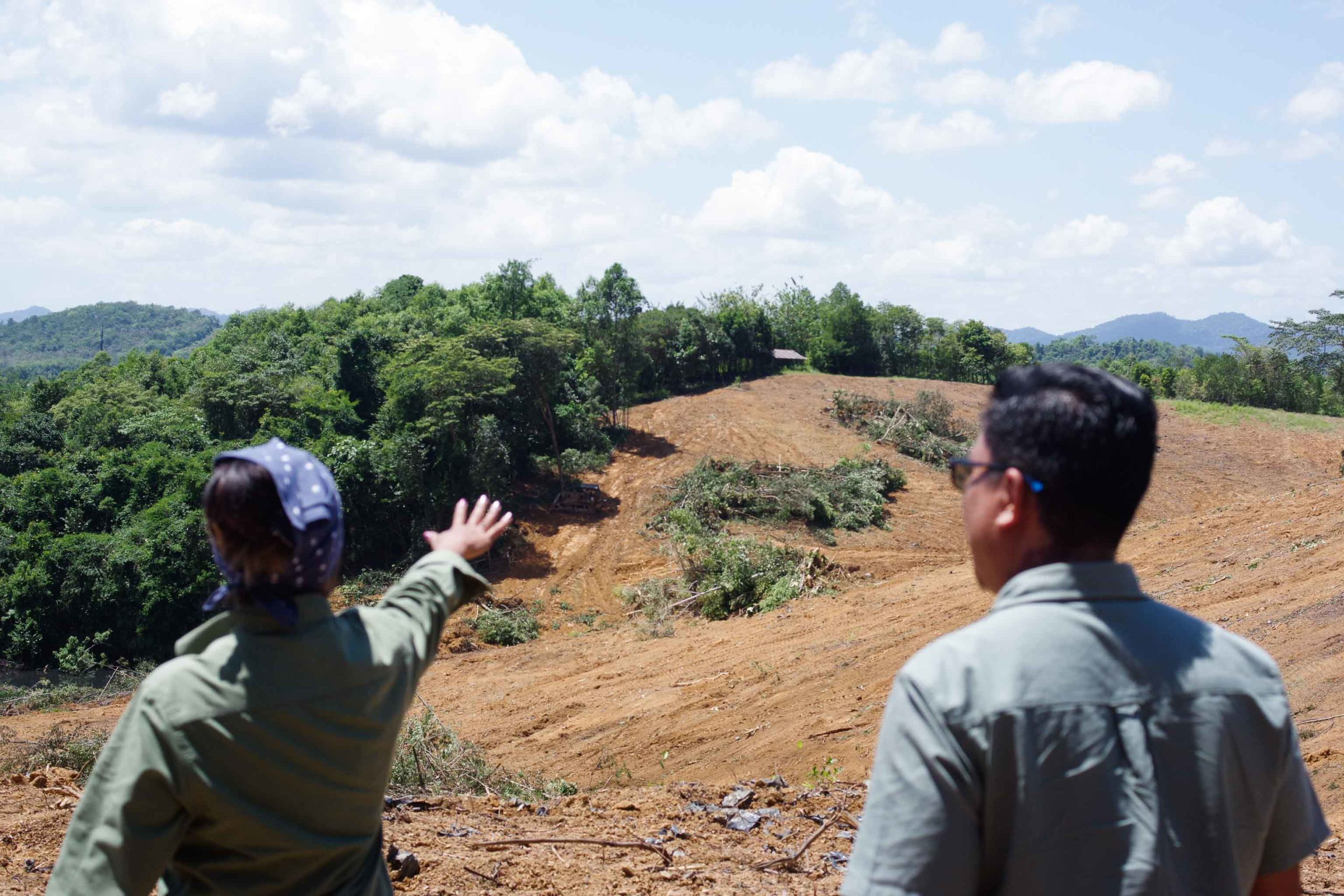 A plantation of rare trees in Perak is being bulldozed (Credit: YH Law)