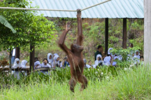 Zoos' revenues were hit hard during the pandemic, spotlighting the role of these parks in wildlife education and conservation. Pic by Cede Prudente