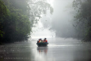 The popularity of river safaris to catch sight of Borneo's Big Five helps conserve wildlife. Pic by Cede Prudente) (Macaranga)