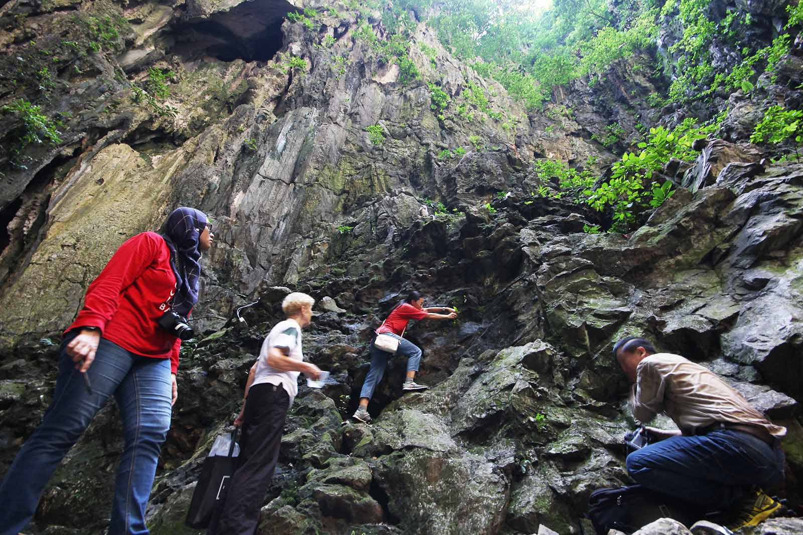 Collecting Epithema parvibracteatum, endemic to Batu Caves and critically endangered; Ruth Kiew is second from left; Nur Atiqah Abd Rahman is on the left. (SL Wong)