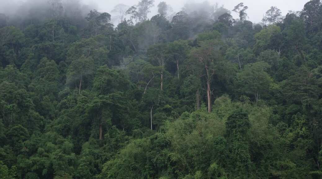 Misty tropical rainforest in Malaysia