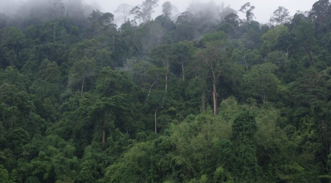 Misty tropical rainforest in Malaysia (YHLaw)