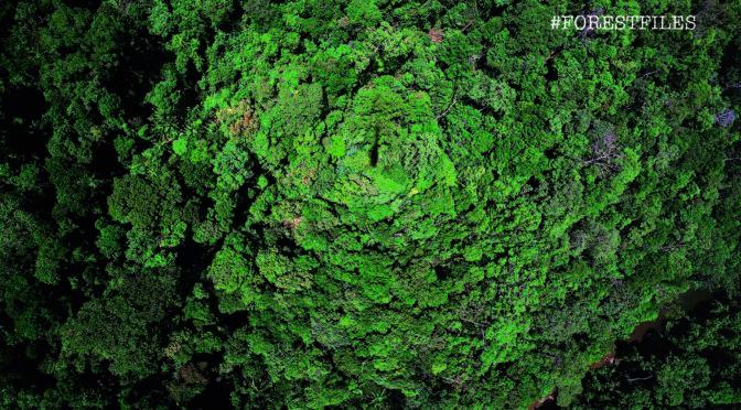 Birds eye view of the Royal Belum Hill Dipterocarp Forest (SKChong_SasyazHoldings)