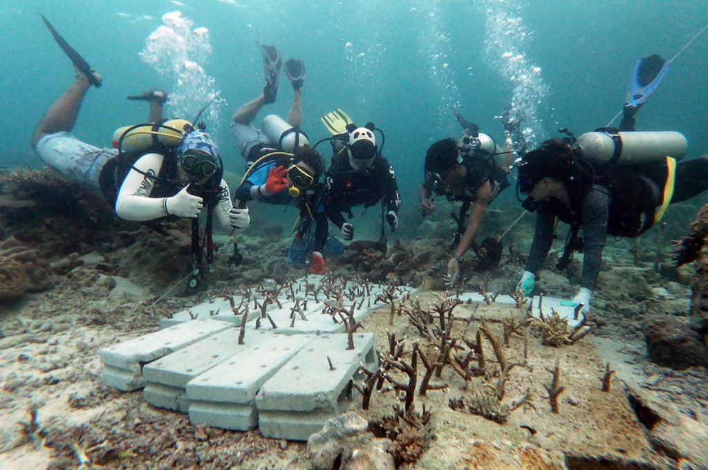 "Faizul (second from right) joins other Reef Check Malaysia divers to ""plant"" new corals on a Mantanani reef destroyed by fish-bombing (Image: Adzmin Fatta / Reef Check Malaysia)"