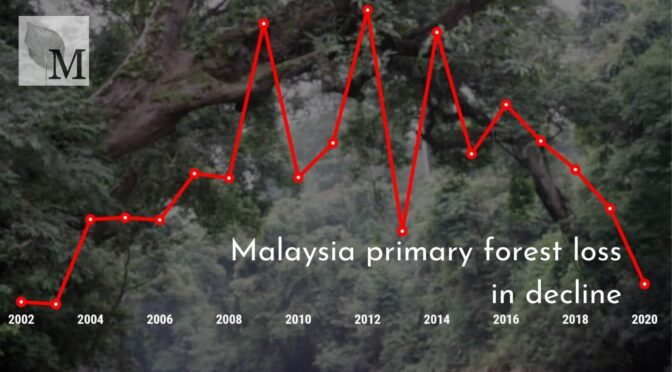 Can Oil Palm Explain The Lower Forest Loss Here?