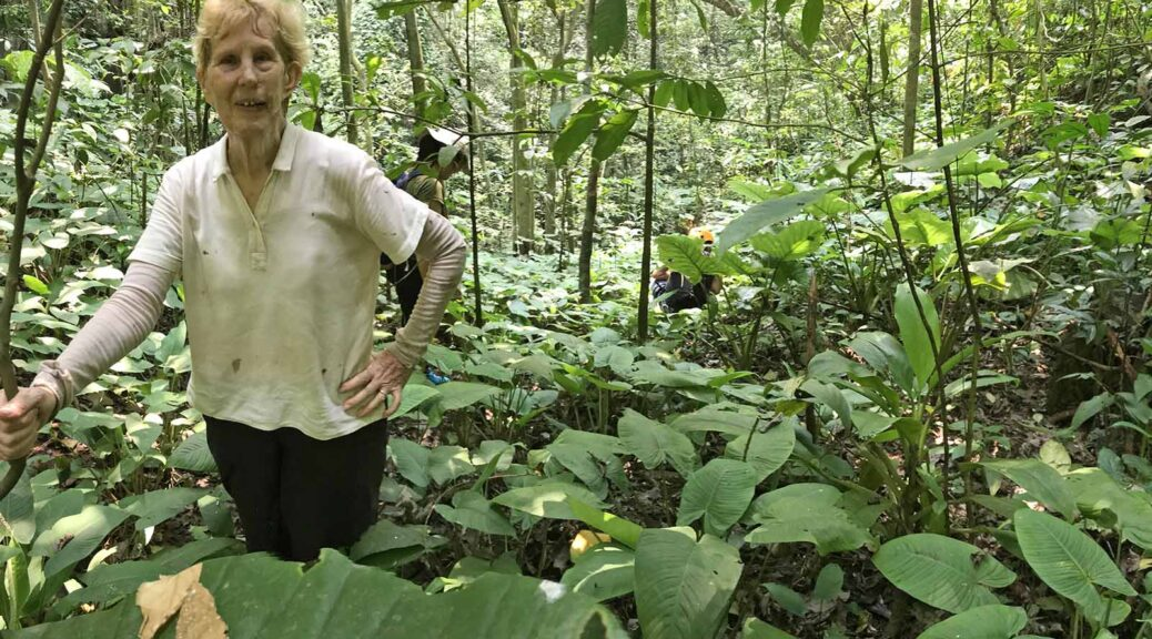 Invasive species threaten plants like the keladi (foreground), discovered only 2 years ago and found only on Batu Caves, says limestone specialist Ruth Kiew. (SL Wong)
