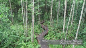 Boardwalk in mangrove forest at Matang, Perak, Malaysia