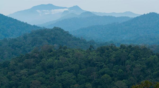 Two Decades of Forest Management – You Evaluate