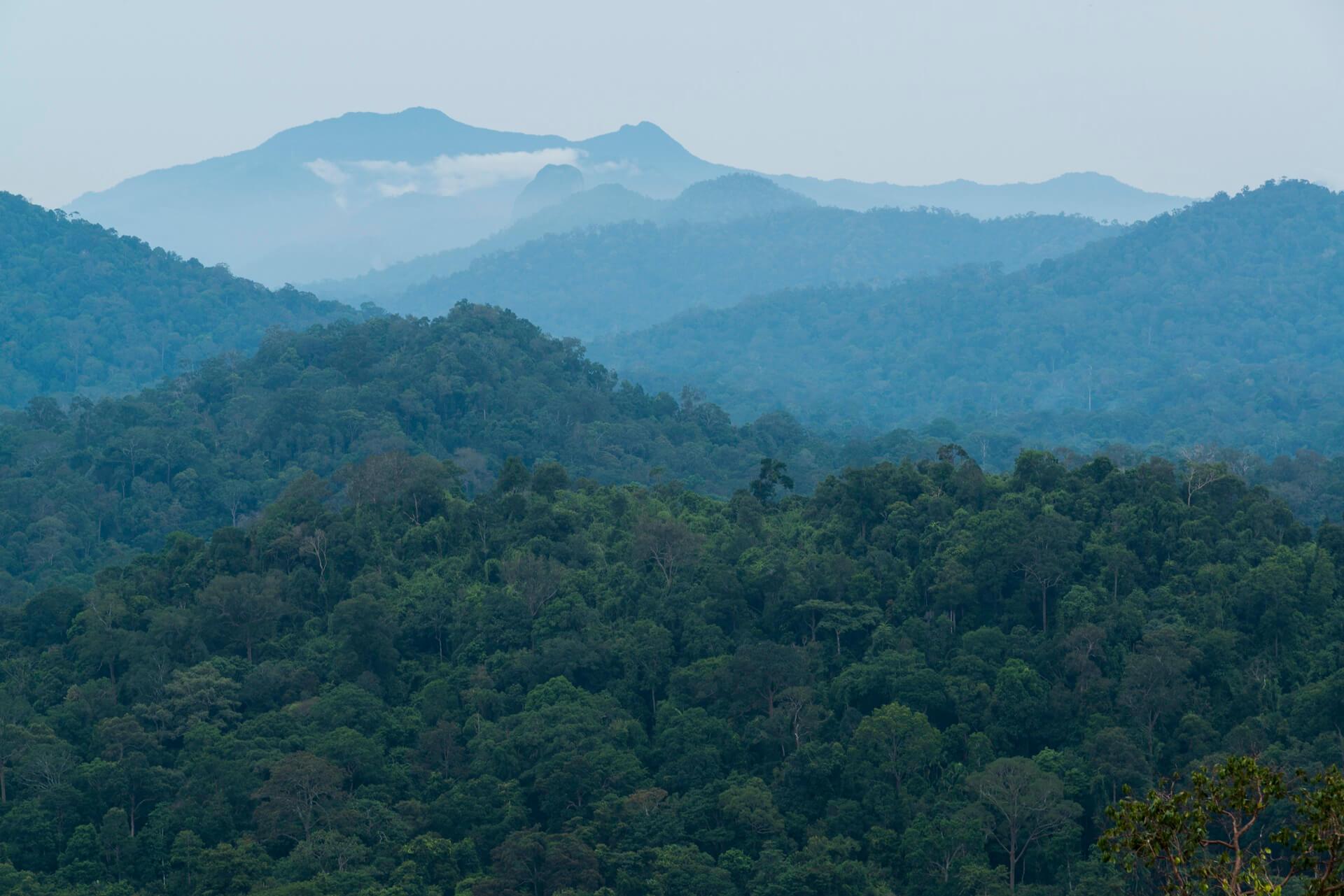 Looking into Taman Negara atop Bukit Awan in Jerantut. Gunung Tahan rises in the distance.