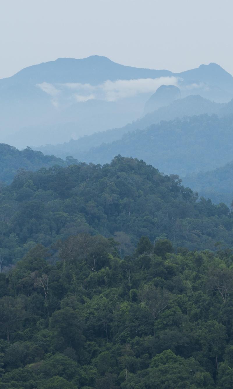 Looking into Taman Negara atop Bukit Awan in Jerantut. Gunung Tahan rises in the distance. (Photo: SK Chong)