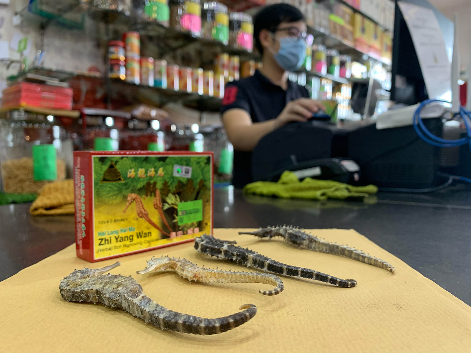 Working with rather than against seahorse users is more effective, says Ng. (Reana Ng)