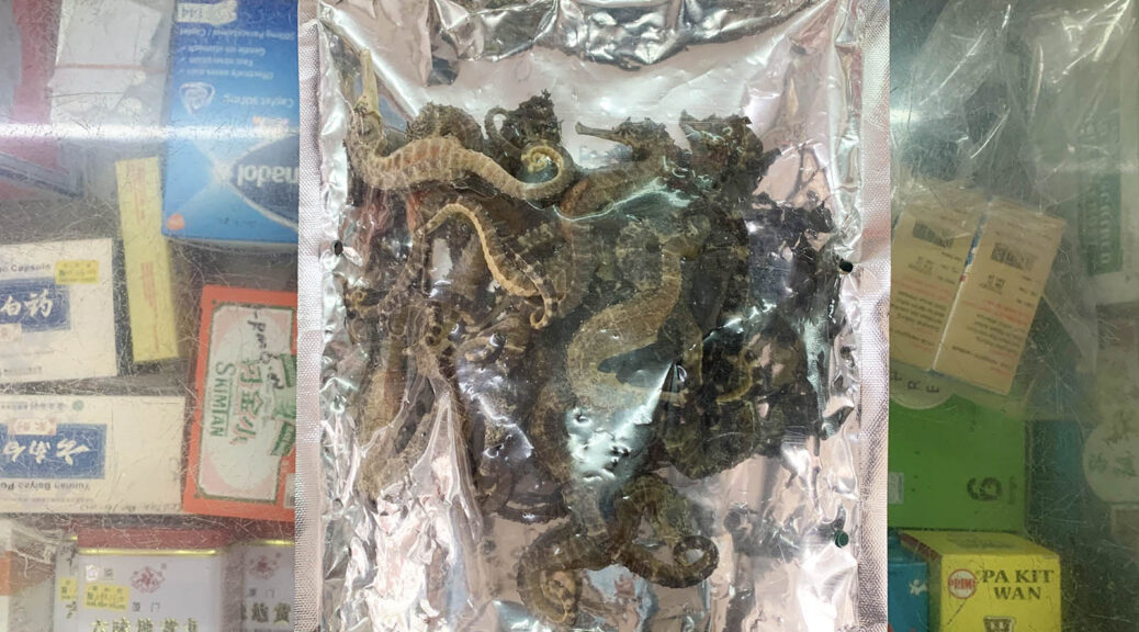 """""""I am not sure about the specific regulation but I know that selling seahorses is not allowed by the government."""" Pictured are dried seahorses kept in the fridge. (Reana Ng)"""