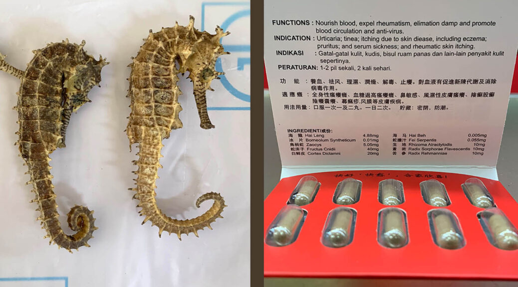 In TCM seahorses are used in dried and capsule form; capsules are more openly sold as they must be approved by the National Pharmaceutical Regulatory Agency. (Reana Ng)