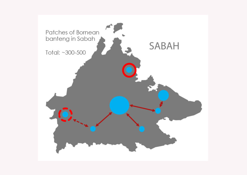 Movement of Bornean banteng animals between populations. The isolated population is in the northeast, indicated by the solid red outer circle (Source: Abdul Hamid Ahmad)