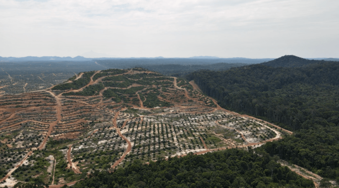 Cut, Carved, and Cleared: When Big Forests Go