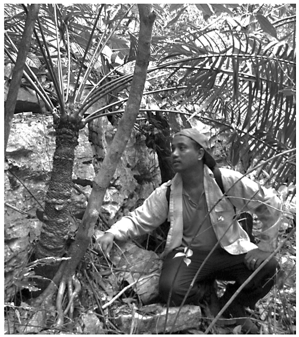 A passionate and knowledgeable botanist, Balu would regale his charges with information at every turn. He is pictured here examining a cycad in Gunung Rapat, Ipoh (Dylan Ong)