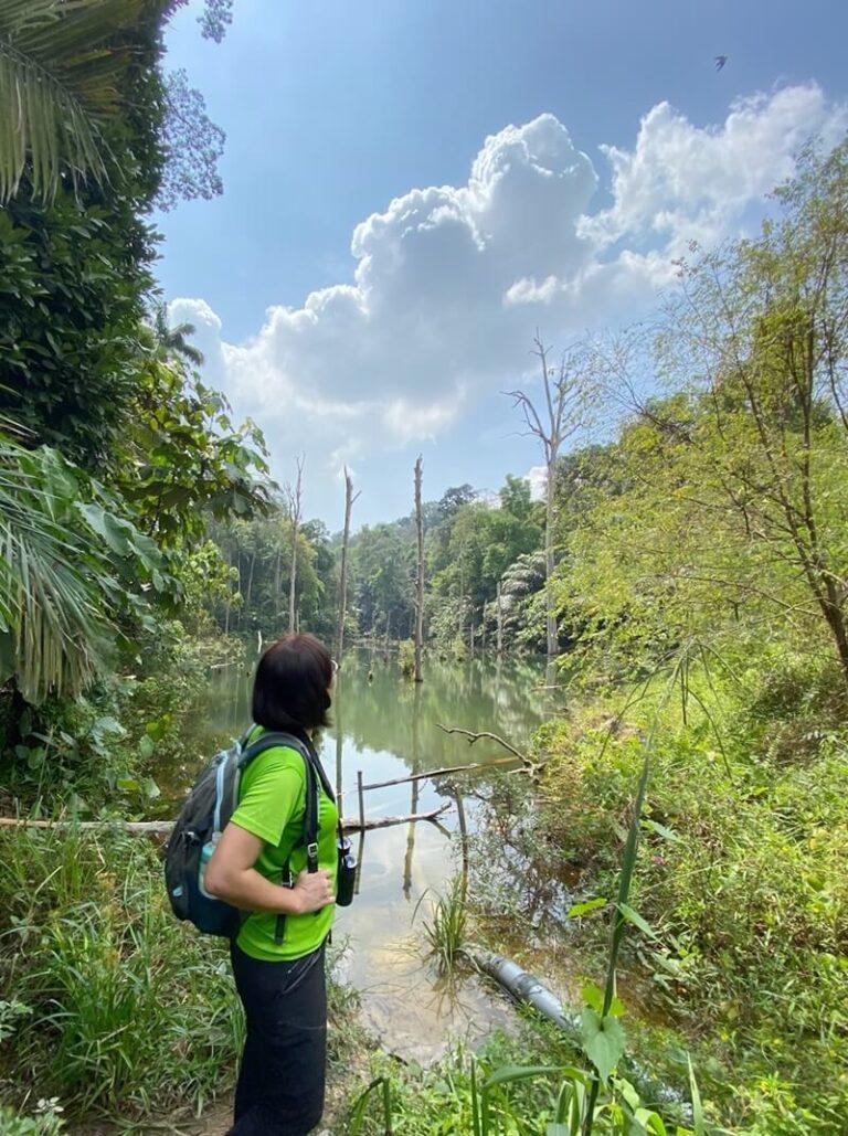 Bukit Cherakah forest reserve in 2020, Shah Alam, Selangor (Irene Lai, Shah Alam Community Forest Socie)