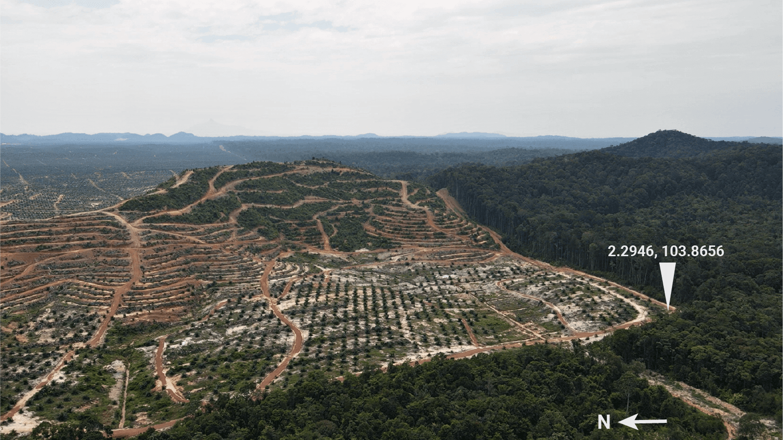 A 2,190 ha oil palm plantation developed by AA Sawit in part of the excised Jemaluang forest reserve, Johor. The remaining Jemaluang forest stretches south of the plantation. (Photo taken 12 September 2021 by IMR Kreatif)