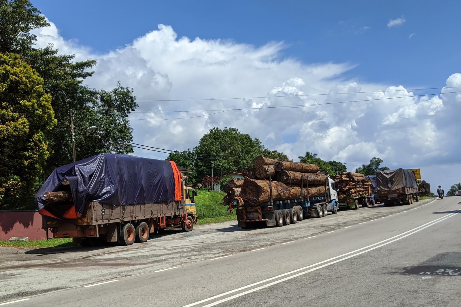 Trucks carrying logs in Mersing district, Johor, June 2020.