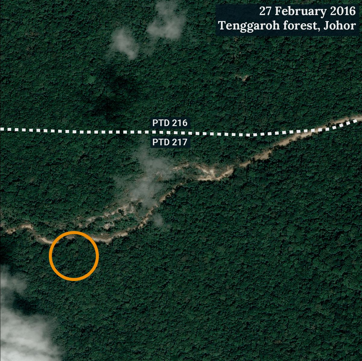 Orange circle marks a site near a reported location of endangered Meranti telopok (Shorea peltata) trees. (Satellite image ©CNES 2016 Distribution Airbus DS / Earthrise)
