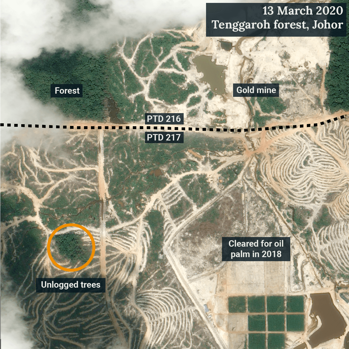 PTD 217 in the excised Tenggaroh forest reserve was cleared for oil palm in 2018. A cluster of trees was left unlogged. (Satellite image ©CNES 2020 Distribution Airbus DS / Earthrise)